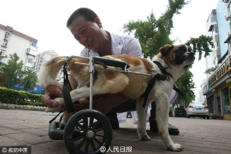 veterinario china salva perro atropellado