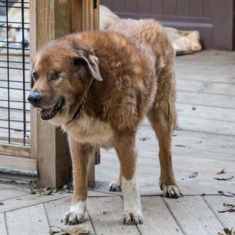 old-friends-senior-dogs-sanctuary