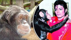 michael-jackson-chimpance-bubbles