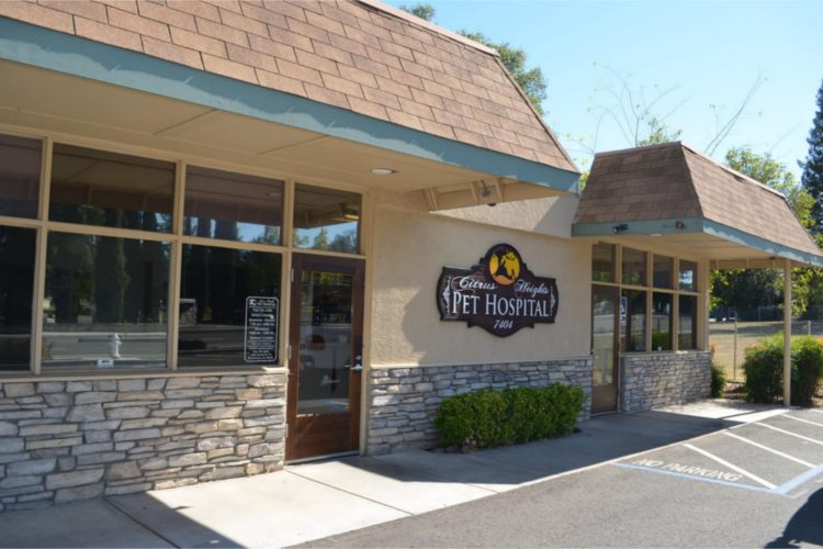 citrus-heights-pet-hospital