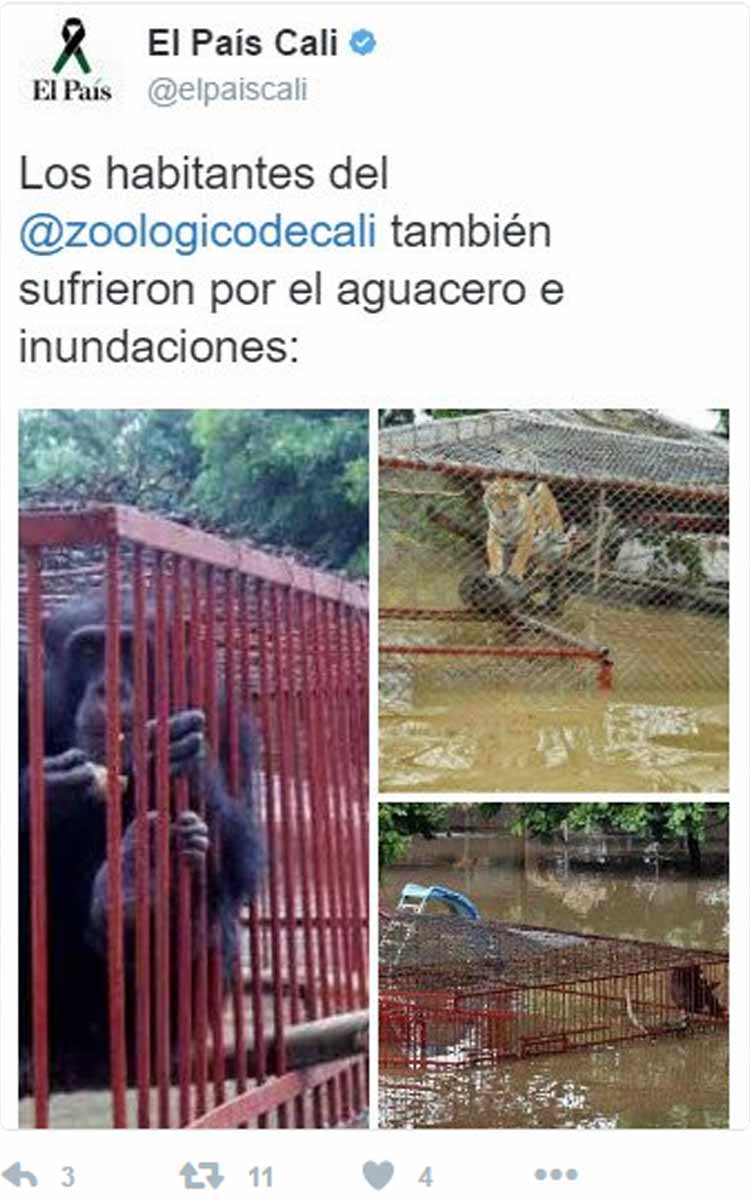 noticia-falsa-el-pais-zoo-cali