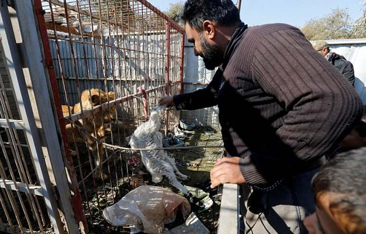 voluntario ayuda animales zoo mosul