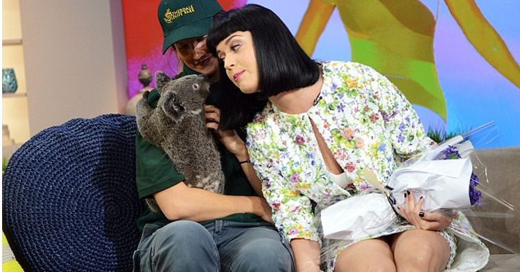 katy perry koalas