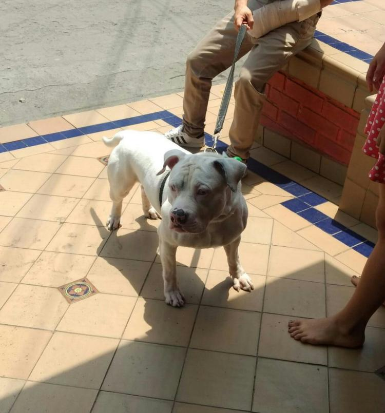 terry pit bull cali colombia