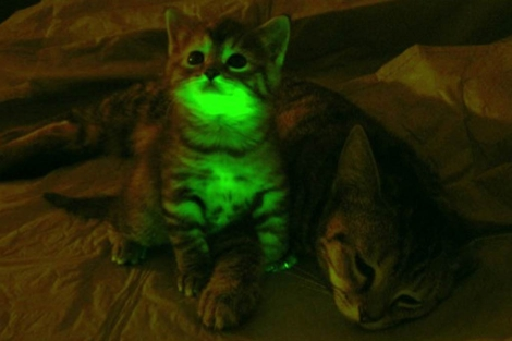 gatos fluorescentes