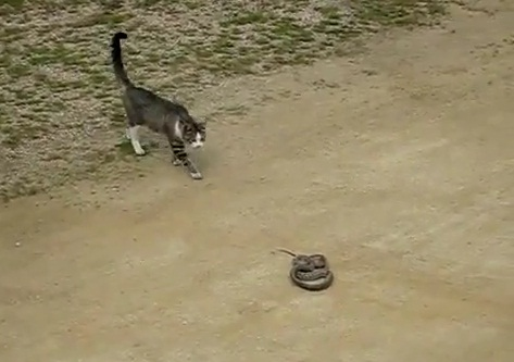 gato vs serpiente