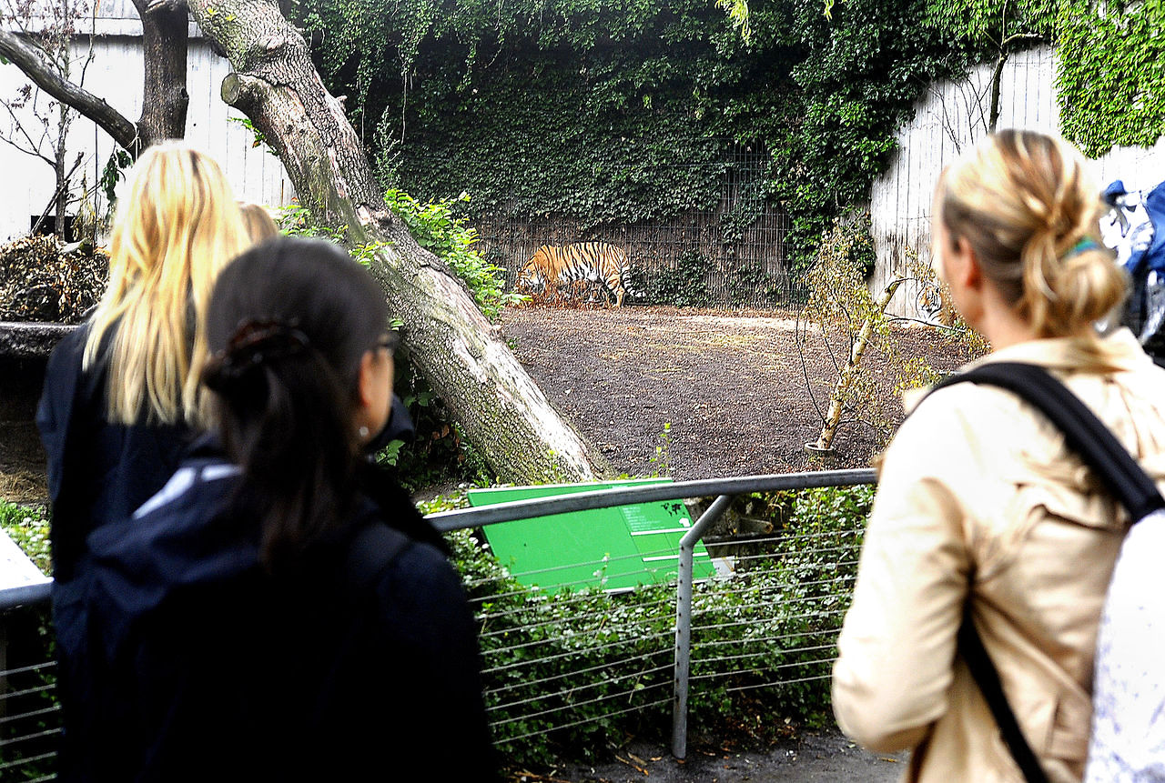 tigres zoo copenhague