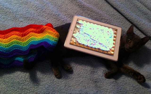 nyan cat marty