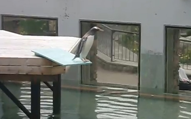 pinguino-trampolin-piscina