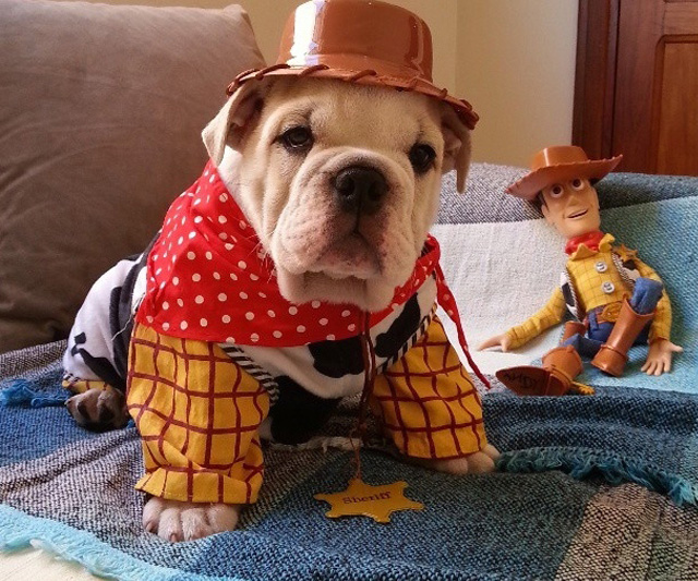 bulldog-ingles-toy-story