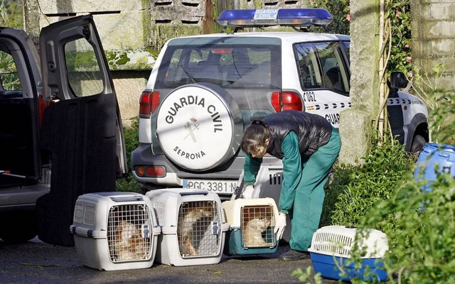 guardia-civil-rescata-perros-rianxo