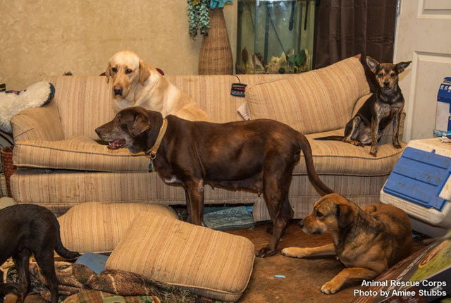 Animal-Rescue-Corps-rescatan-perros-casa