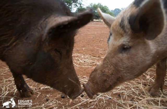 Victorian-animal-sanctuary-australia