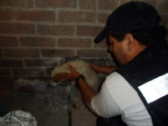 cachorro salvado pared casa mexico
