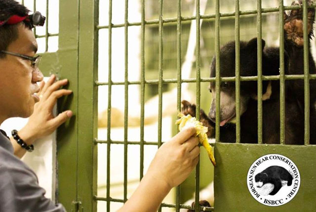 Bornean-Sun-Bear-Conservation-Centre