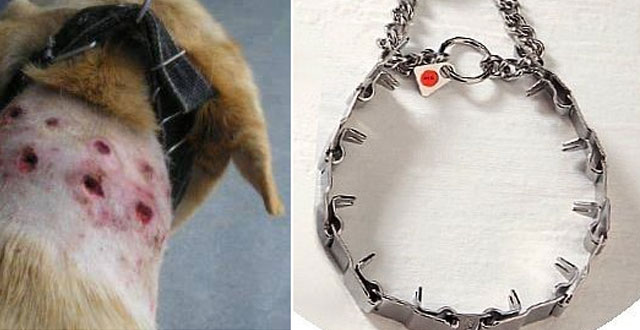 amazon-uk-prohibe-collares-de-castigo-para-perros