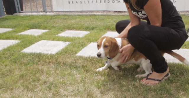 Beagle-Freedom-Project