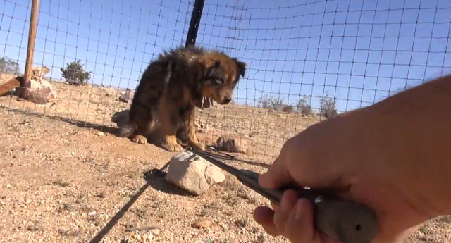 hope-for-paws-salva-perros-desierto-mojave