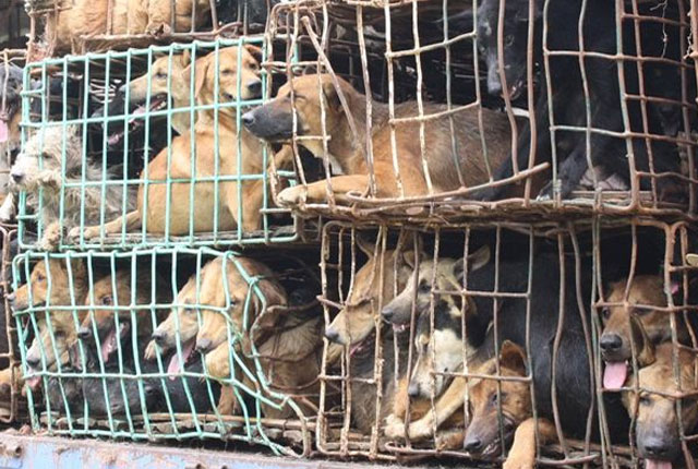 rescate-3280-perros-china