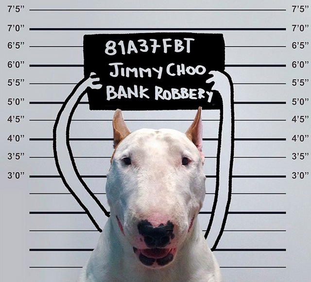 Rafael-Mantesso-y-bull-terrier