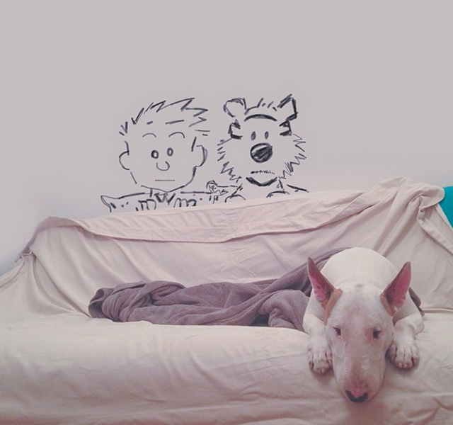 bull-terrier-Jimmy-Choo-instagram