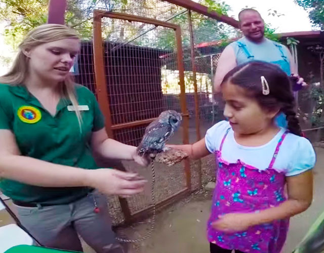buho-ciego-Wildlife-Learning-Center