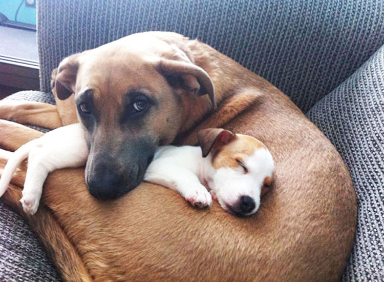 fotos-de-perros-adorables-e-inseparables