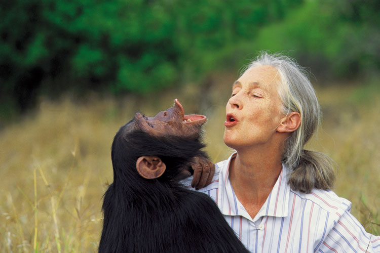 Jane-Goodall-recibe-premio-catalunya