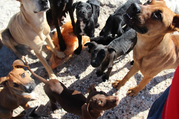 Baja-34-Animal-Rescue-Fund-perros