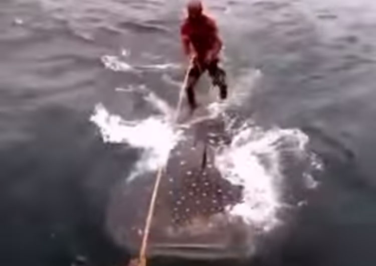 video-surf-encima-tiburon-ballena