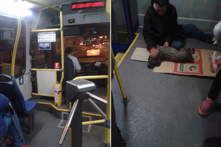 conductor-autobus-salva-perro-atropellado