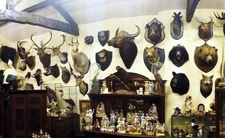 taxidermia-animales-en-peligro-de-extincion