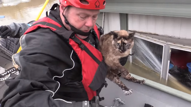 video-rescate-gato-inundaciones-missouri