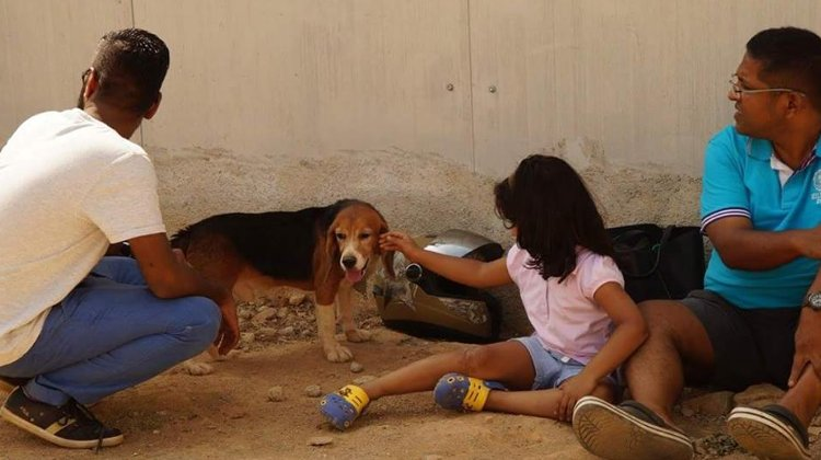 beagles india ven luz por primera vez