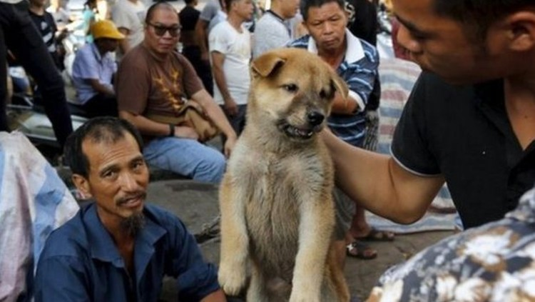 11 millones firmas contra festival carne yulin