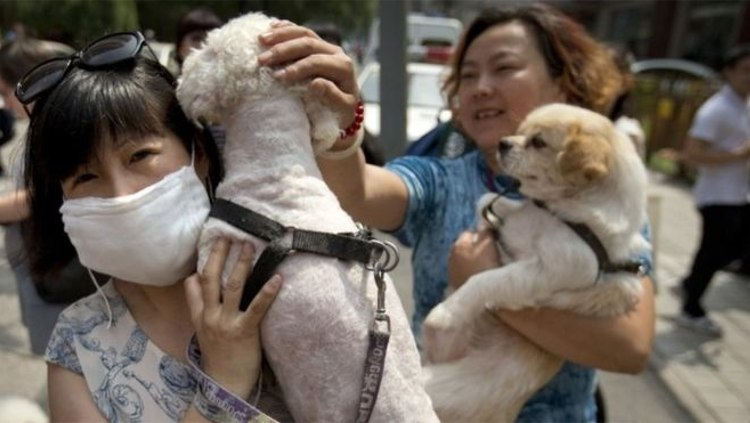 11 millones firmas festival carne yulin china