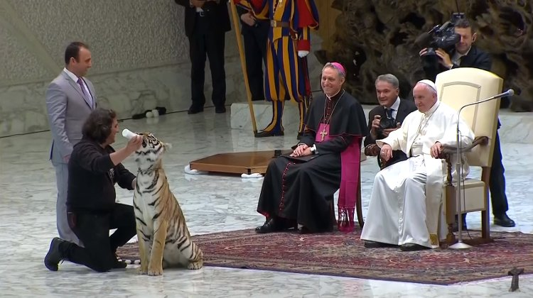 papa francisco tigre