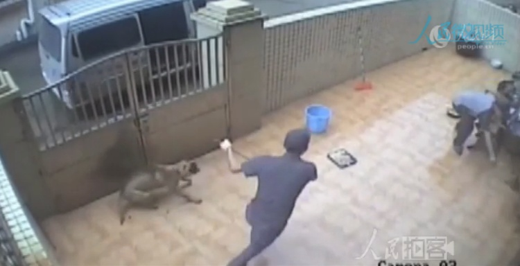 video ladrones roban dos perros casa china