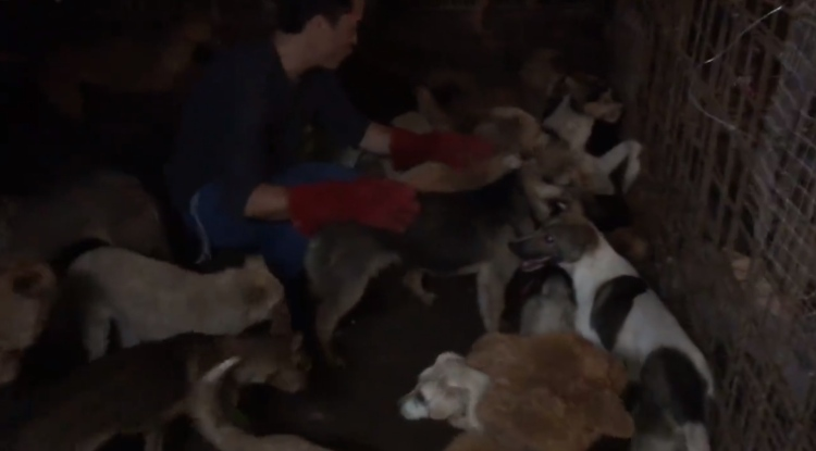 video rescate 1000 perros yulin
