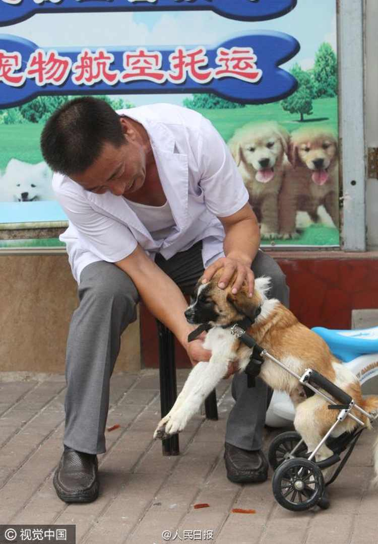 veterinario salva perro atropellado china