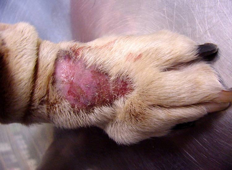 fotos alabama rot