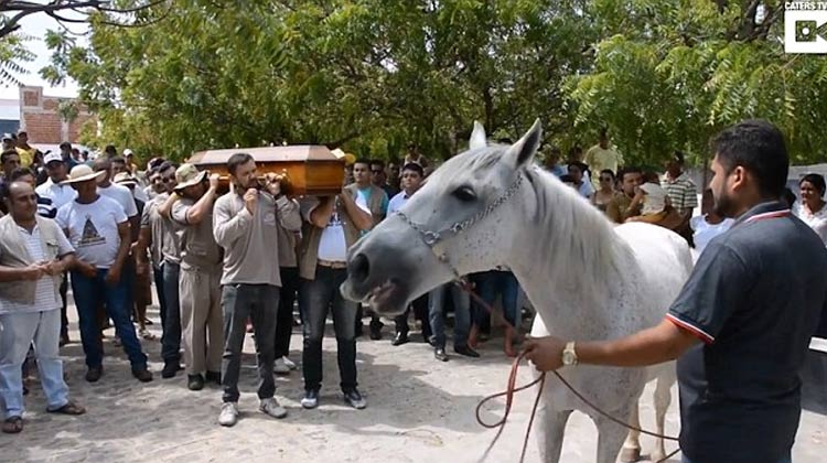 video-caballo-funeral-dueno-brasil