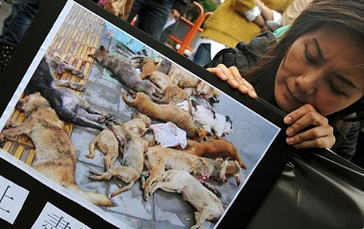 taiwan prohibe sacrificio animales refugio