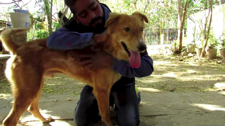 perro atropellado udaipur india se recupera