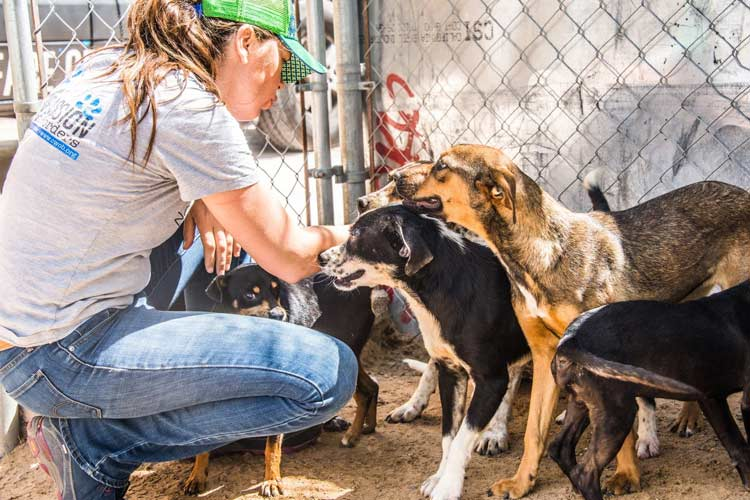 rescatadores de perros Compassion Without Borders