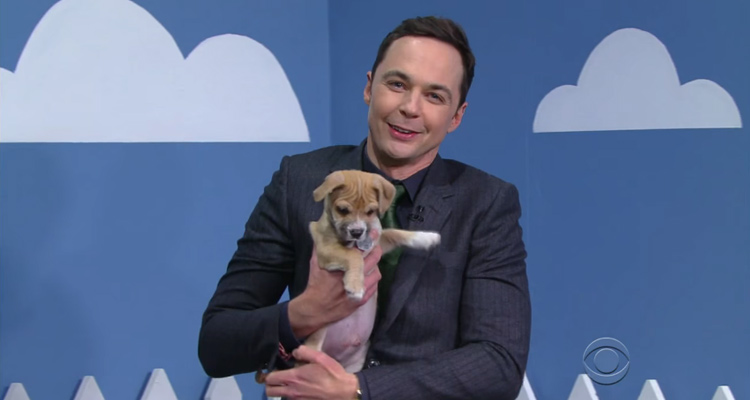Jim Parsons The Big Bang Theory ayuda adoptar perros