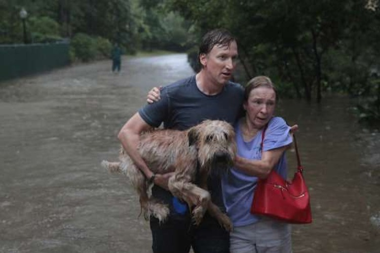 fotos perros huracan harvey houston
