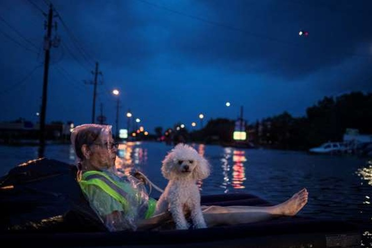 fotos rescate perros huracan harvey houston