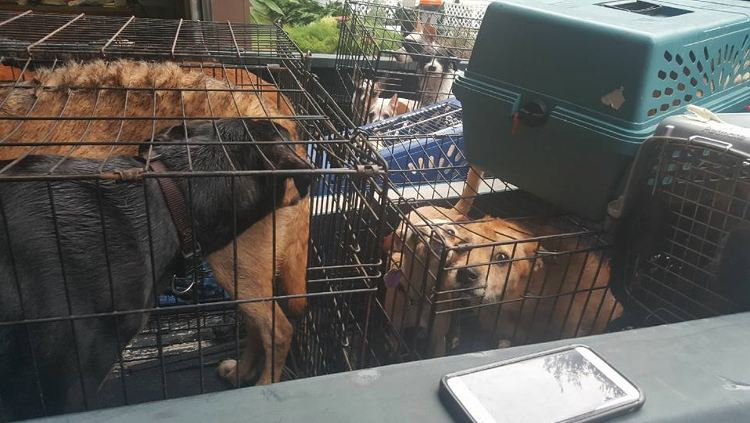 21 perros salvados inundaciones houston