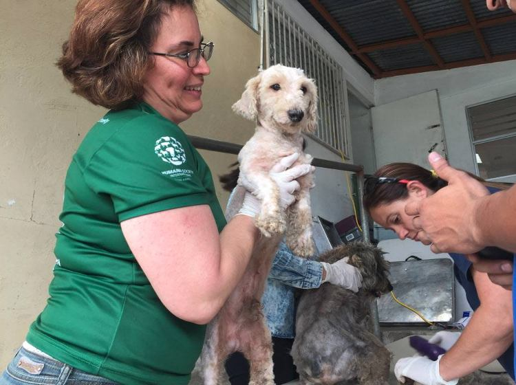 Humane Society International América Latina rescata 68 perros